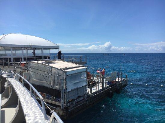 GBR Agincourt Reef - The Quicksilver pontoon