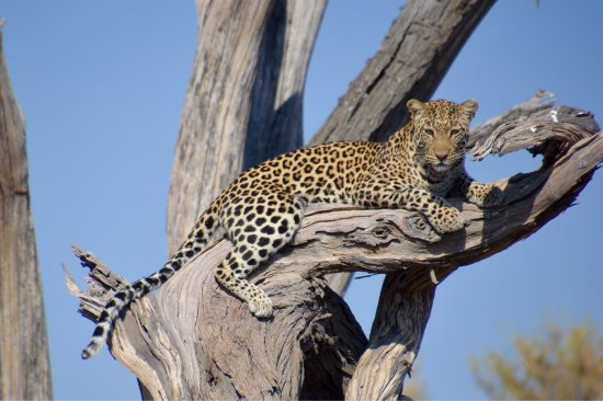 Linyanti Reserve, Μποτσουάνα: photo0.jpg