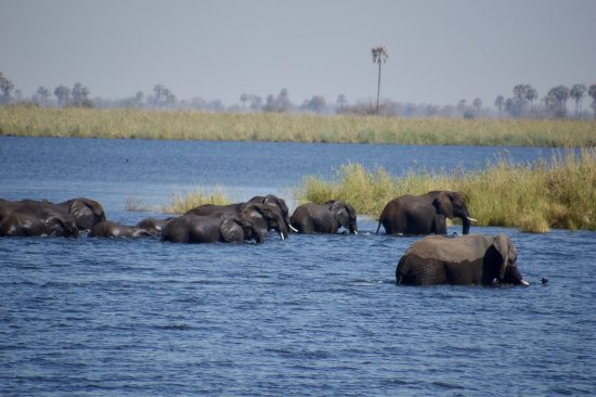 Linyanti Reserve, Botswana: photo3.jpg