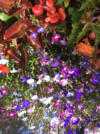 Leixlip, Irlande : Flowers are eye candy and refreshing for the senses