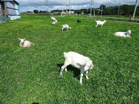 Tonden Farm