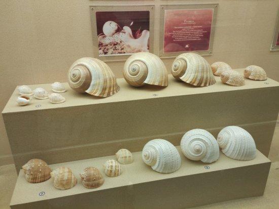 Shell World Museum: очень даже красиво