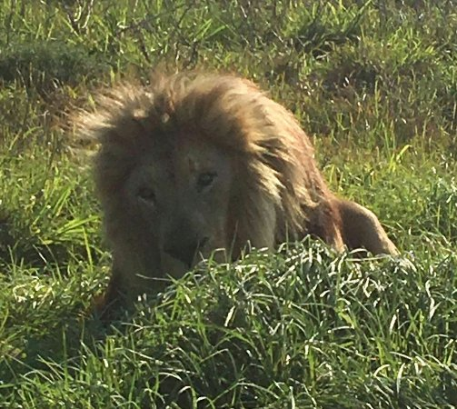 Seaview Lion Park: IMG-20160911-WA0061_large.jpg