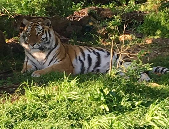 Seaview Lion Park: IMG-20160911-WA0060_large.jpg