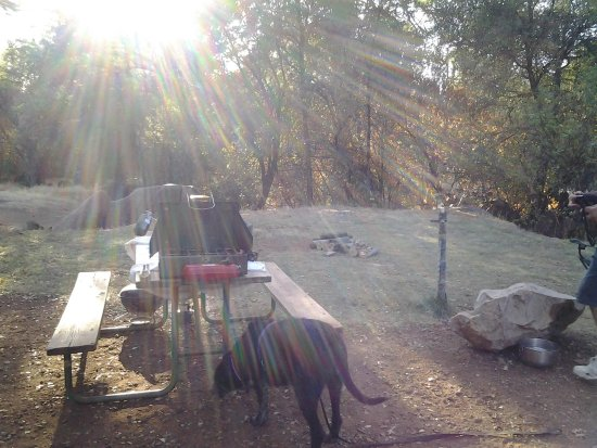 Columbia, Kalifornien: One of our campsites with it's picnic table (our dog Star)