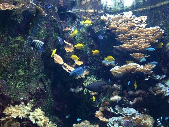 tarifs リヨン aquarium de lyonの写真 トリップアドバイザー