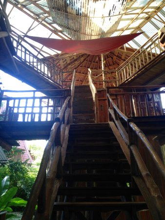 Don Jon's Lodge and Restaurante: Vue dans la Tree House, avec cours de yoga en haut.