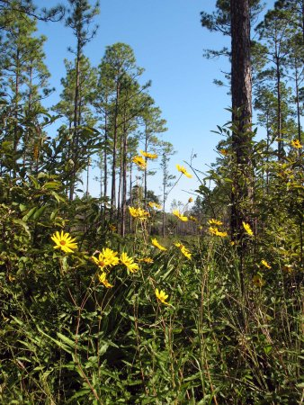 Folkston, GA: The fall is a beautiful time to visit.