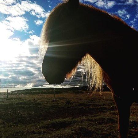 Gaski Horse Center