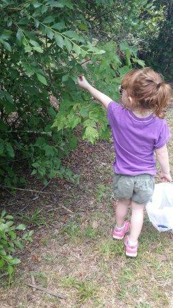 Woodstock, GA: Blueberry picking