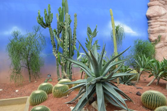 desert vegetation picture of terra botanica angers