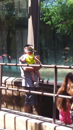 Jacksonville Zoo & Gardens: Watching the penguins being fed. Very fun!