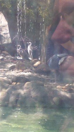 Jacksonville Zoo & Gardens: Beautiful bird exhibit!