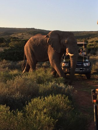Shamwari Game Reserve, Afrique du Sud : Game drive at Shamwari