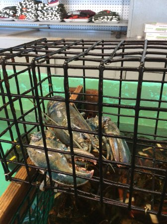 Very Rare Blue Lobster Picture Of Shaw S Fish Lobster Wharf New Harbor Tripadvisor