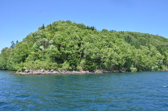 Shikaoi-cho, Japan: 湖岸の樹林