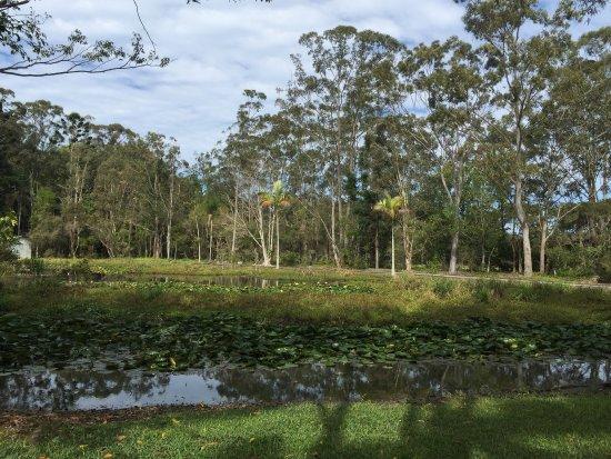 Duranbah, Australien: photo1.jpg