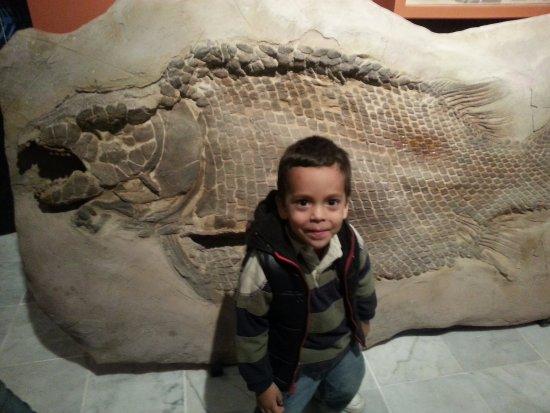 Bosque Venustiano Carranza: Exposicion de dinosaurios