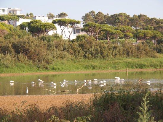 Zdjęcie Dunas Douradas Beach Club