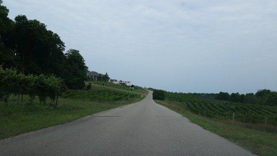 Fairfield Inn & Suites Traverse City: Mission Peninsula Vineyards