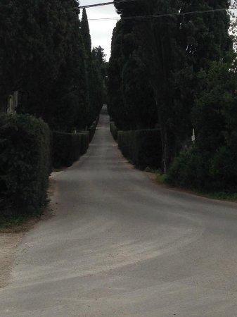 Montespertoli, Italia: Viale per il castello
