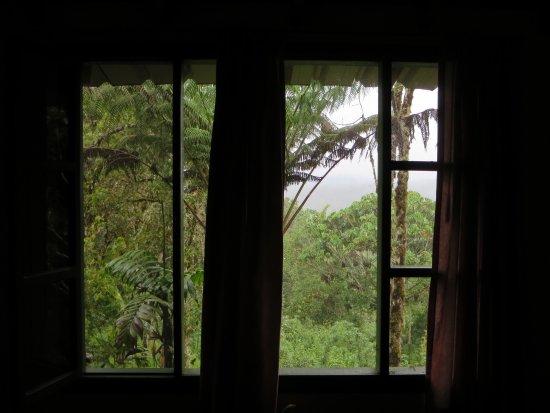 Cosanga, Ecuador: Ausblick in den Nebelwald.