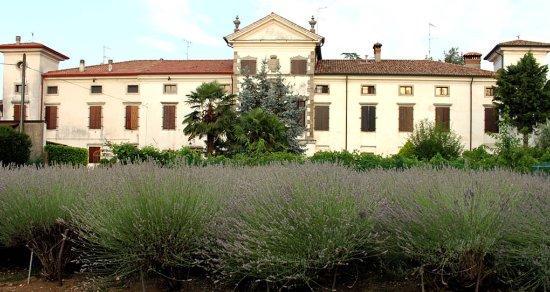 Bed and Breakfast di Villa Ottelio: Lavendel