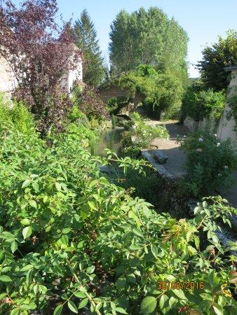 Chedigny, France : la végétation