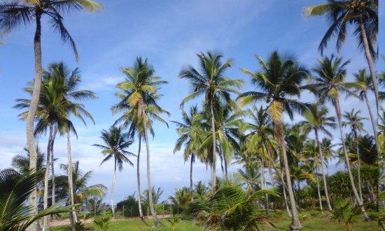 Marau, BA: Península de Maraú...