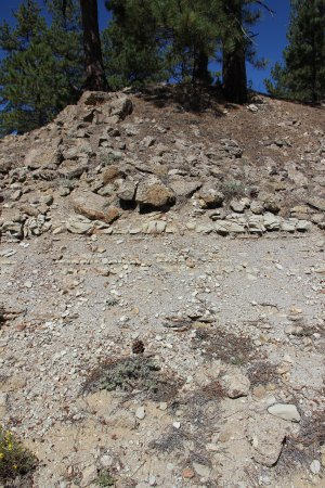 Florissant, CO: On the big stump hike, you see distinctly the layers, including shale where fossils are found