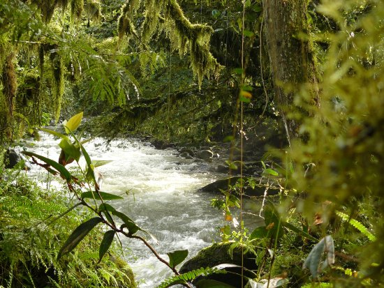 El Refugio de Intag Cloud Forest Lodge: River Toabunche