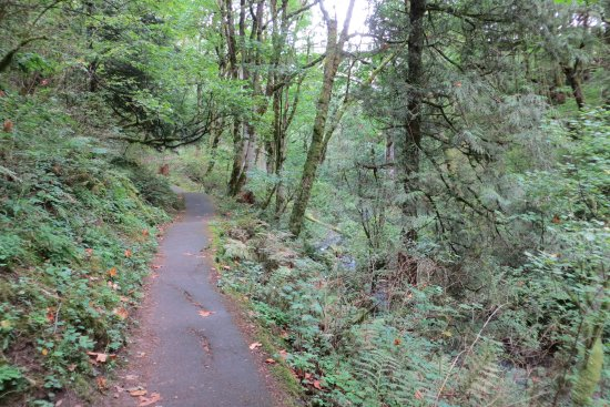 Trail to lower/first falls. Latourell Falls, Troutdale, OR