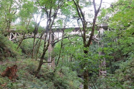 Bridge at Latourell Falls, Troutdale, OR