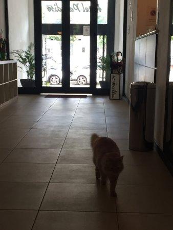 Hotel Paradiso: photo1.jpg