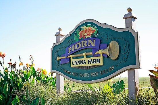 Horn Canna Farm