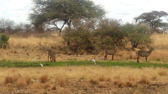 Meru National Park, Kenia: IMG_20160910_122624_large.jpg