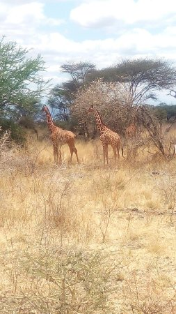 Meru National Park, Kenia: IMG_20160910_123914_large.jpg
