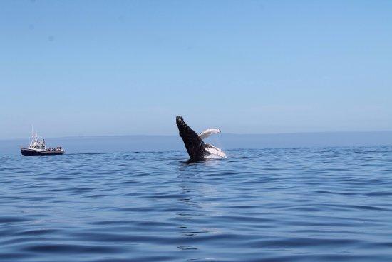Pleasant Bay, كندا: photo1.jpg