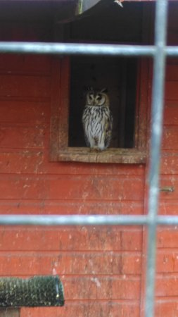 Winsford, UK: Owls were a lovely bonus to our stay, they are amazing birds!