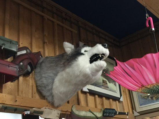 Espanola, Kanada: Stuffed Wolf head on display at Northwest Trading Company