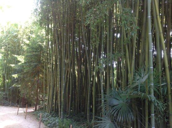 Generargues, Frankrig: Bamboe huizen hoog