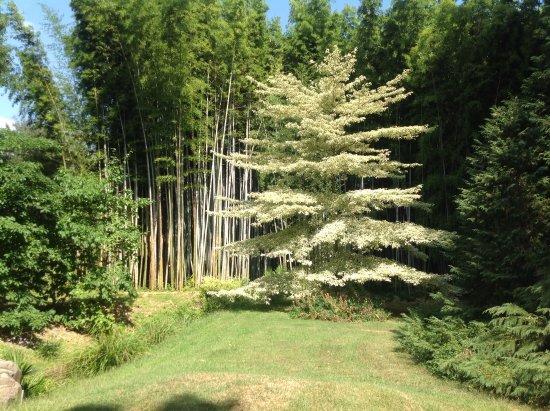 Generargues, Frankrig: Een zeldzame boom