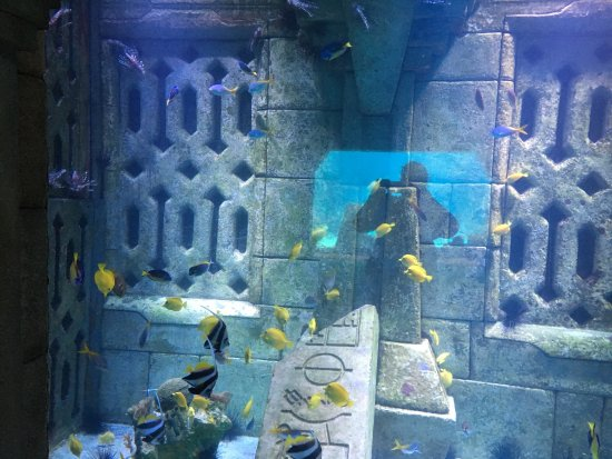 Marine Habitat at Atlantis