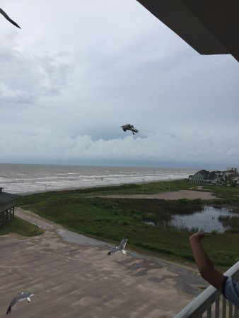 Holiday Inn Club Vacations Galveston Beach Resort: photo4.jpg