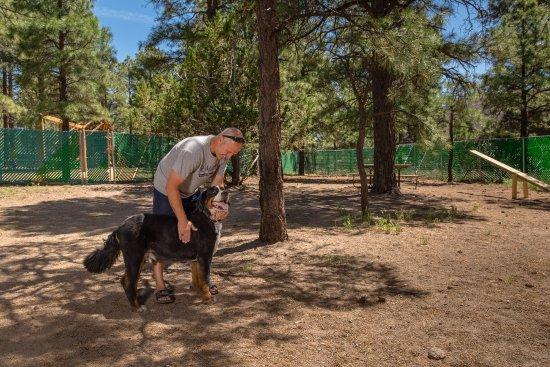 Flagstaff Grand Canyon KOA: Dog Parks-Pets Welcome!