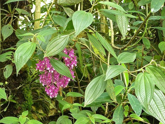 El Refugio de Intag Cloud Forest Lodge: Orchid