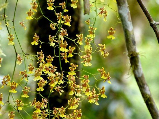 El Refugio de Intag Cloud Forest Lodge: Orchids