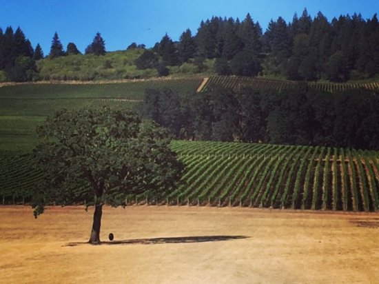 Sea to Summit Tours & Adventures: View from Stoller Vineyards.