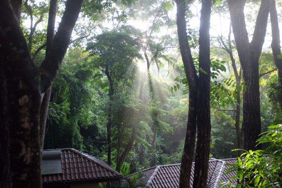 Pilates Nosara: View from my balcony/entry to bungalow (not a stock photo/no filter!)