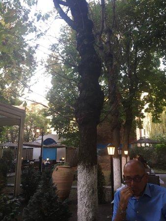 Taverna Olympos: photo3.jpg